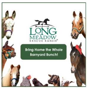Barn Buddy Sponsorship: Click to Enlarge